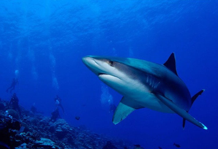 Нам говорили, что акул трогать нельзя, но акулам-то не говорили, чтобы они нас не трогали