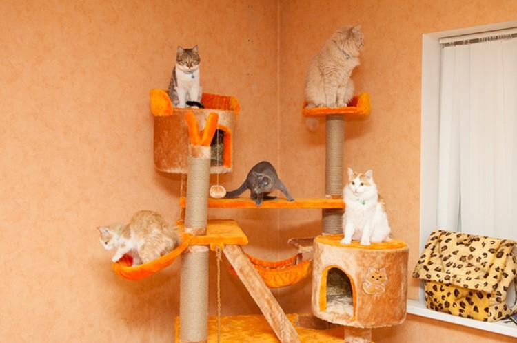 Саратов. Клуб для любителей кошек.