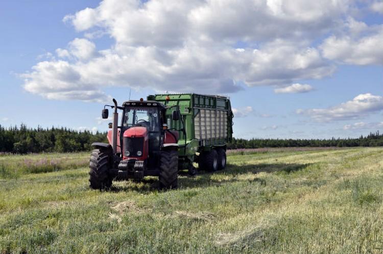 Несмотря на суровый климат заполярным аграриям есть, чем похвастаться.