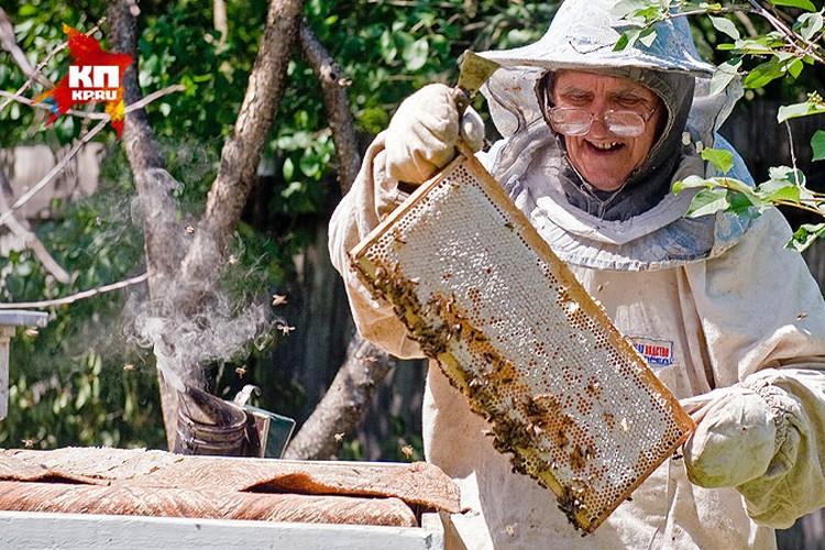 Пчёлы издавна считаются полезнейшим насекомым.