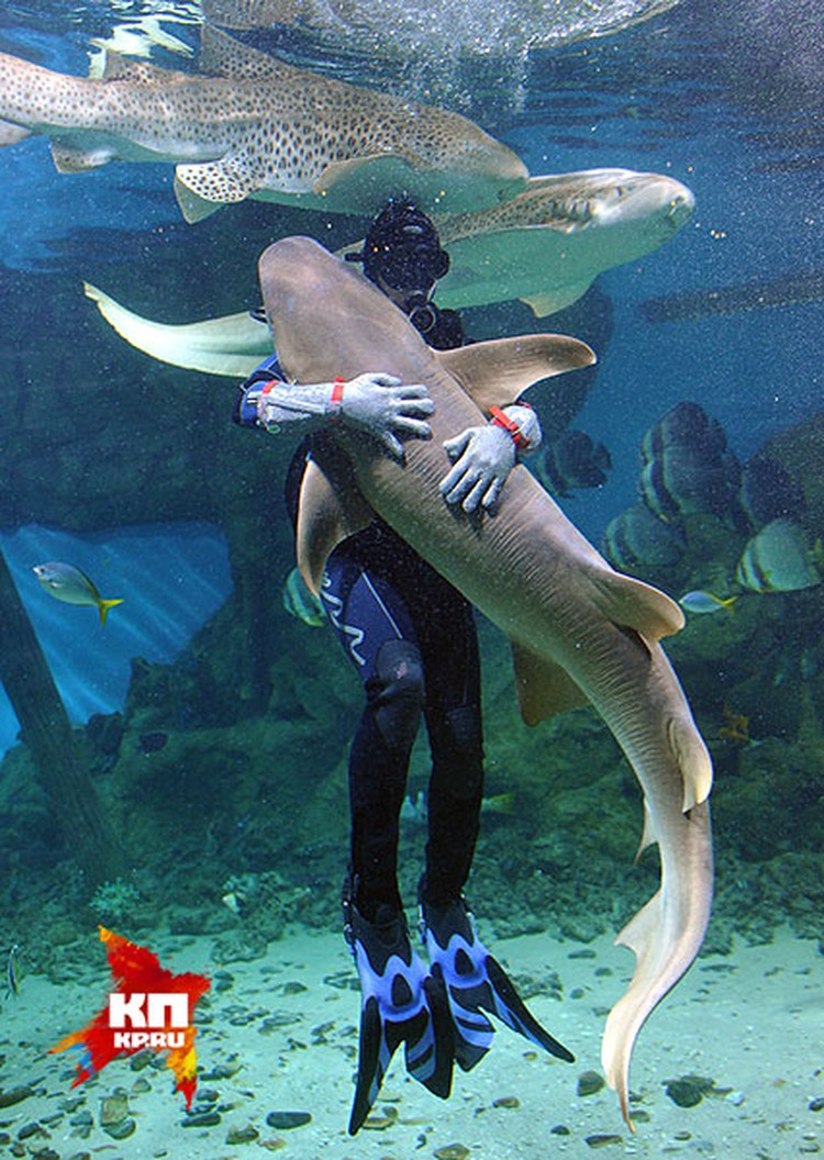 """Так близко """"пообщаться"""" с акулами дано не каждому, но даже домашний аквариум может привести нервы в порядок."""