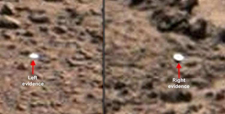 Грибы, обнаруженные в ноябре 2012 года.