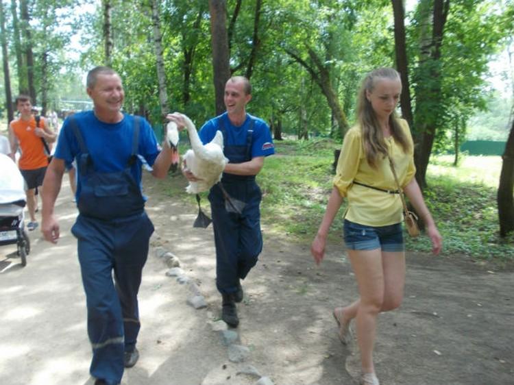Пострадавшего лебедя охотно приняли в костромском зоопарке. Фото ГУ МЧС по КО