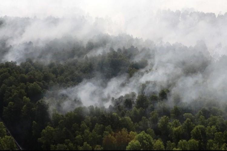 В итоге огонь прошел 90 гектаров. Фото: МЧС.
