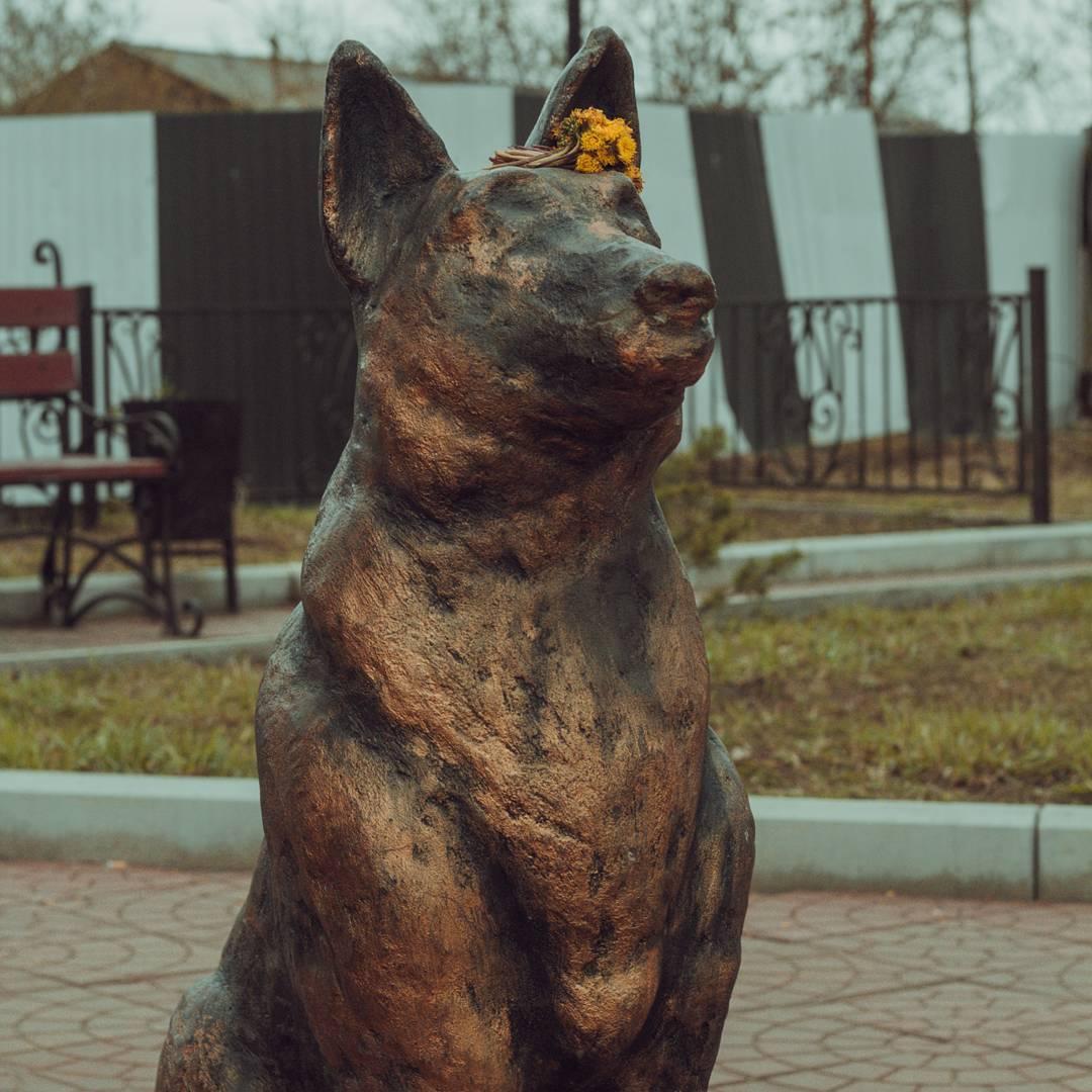 Пограничник с собакой стерегут покой горожан в городе Черемхово уже семь лет