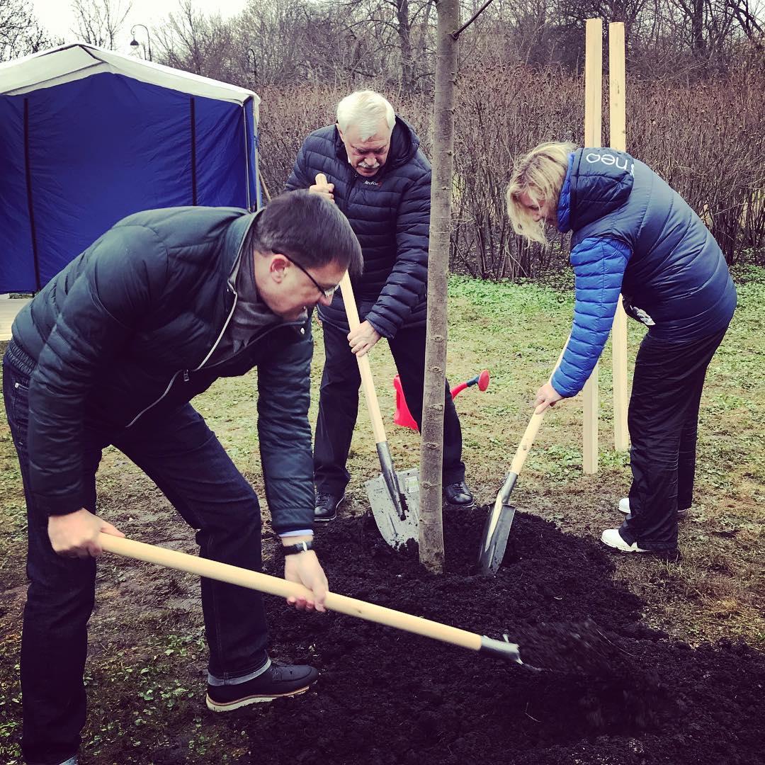 Субботник в Петербурге. Сажаем деревья в Пушкине.