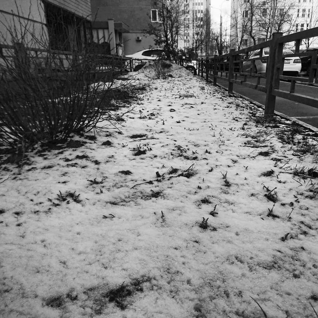 Апрельский снег #снег #moscow
