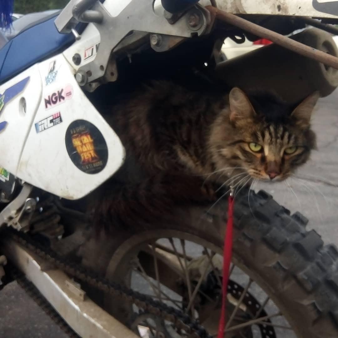 Кот-байкер готов на старт