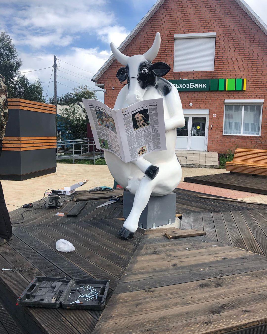Во всех ты ракурсах, коровка, хороша! Читающая корова в Тулуне